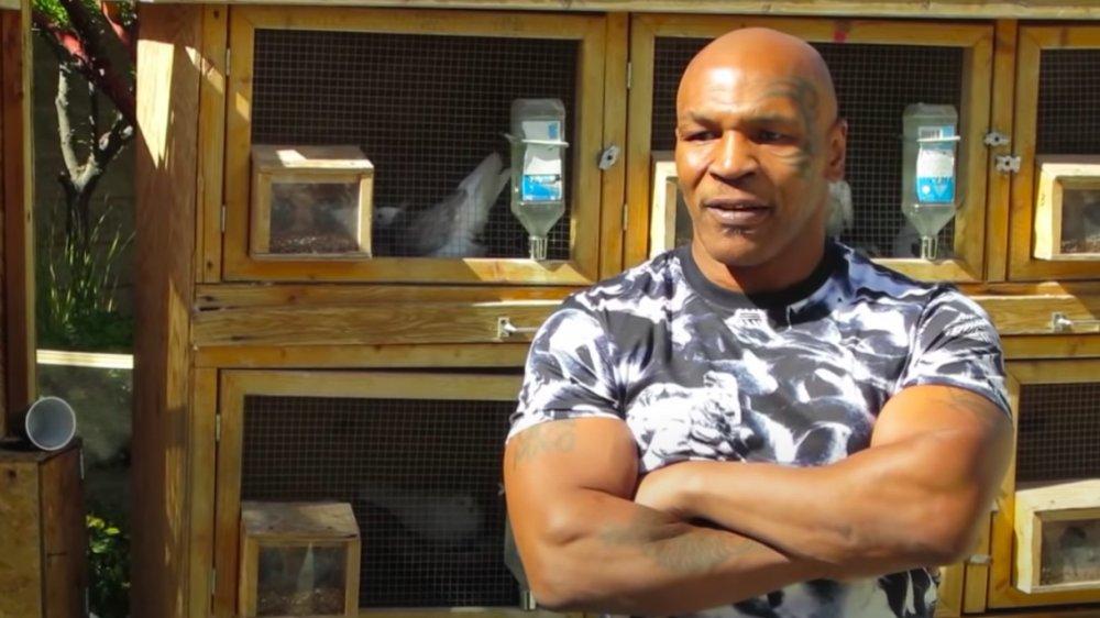 Mike Tyson und sein Taubenlebensraum